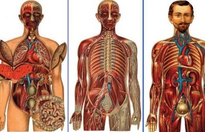 تاثیر ماساژ روی اندام بدن